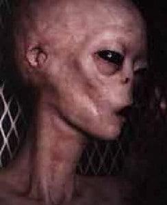 Alien - Echtes Bild oder Fälschung?