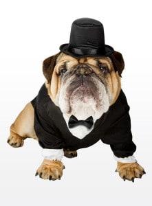 Feiner Herr Hundekostüm