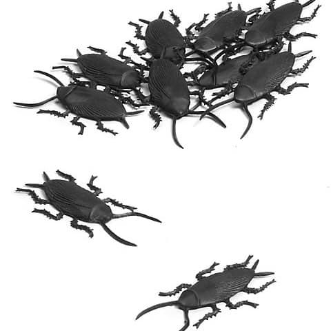 Kakerlaken-Set