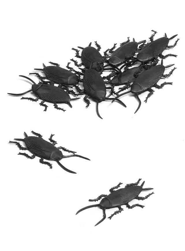 kakerlaken-set-halloween-deko--mw-131610-1
